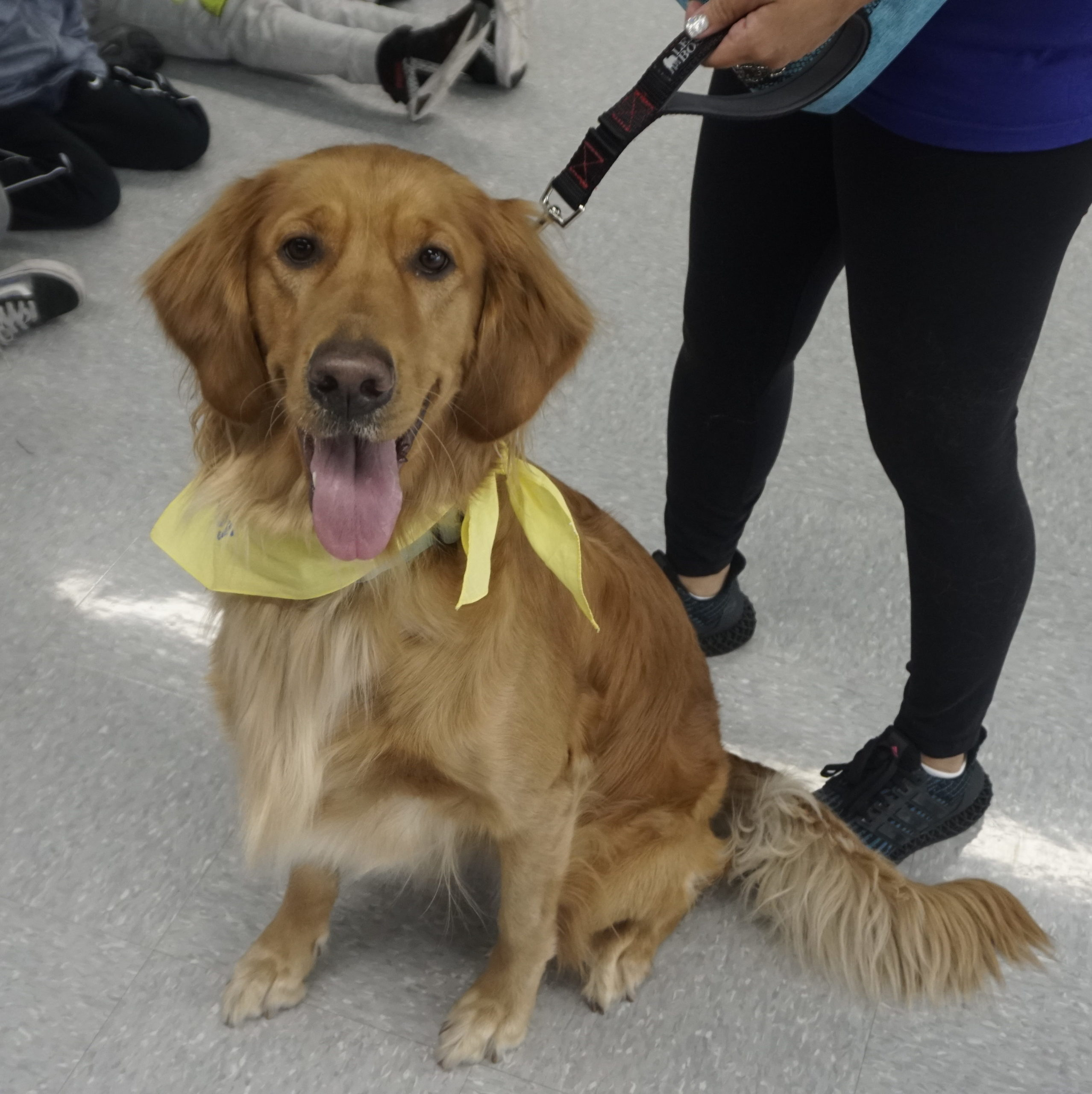 Laney Paws for Patients Therapy Dog